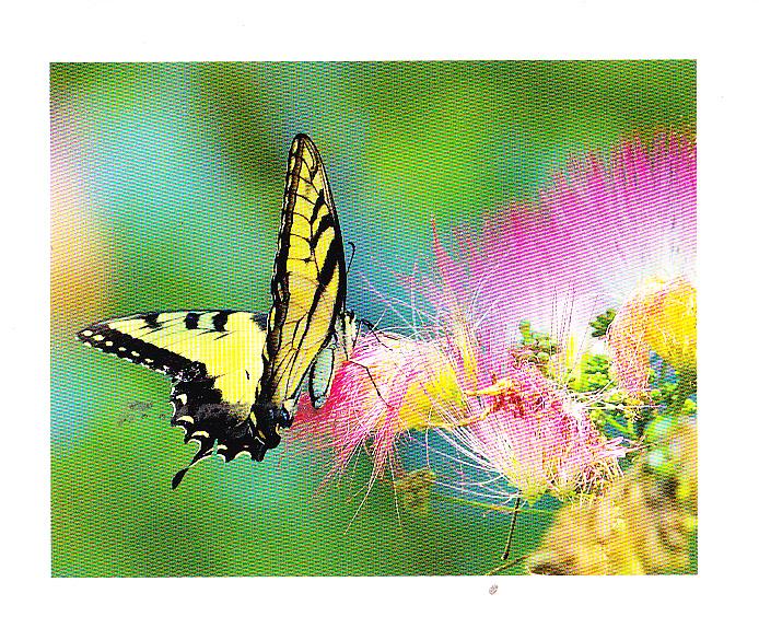 Un instant de douceur | lepapillondeslivrescerclerenevigo